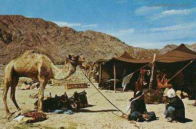 At end of day a goatu0027s hair tent felt like home. & Inhospitality not being kind to strangers was the sin of Sodom.