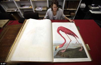 Audubon Elephant Folio