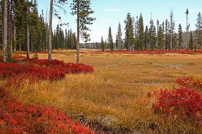 Autumn in Yellowstone National Park