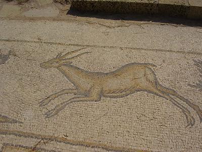 Ancient gazelle mosaic<br> Caesarea, Israel